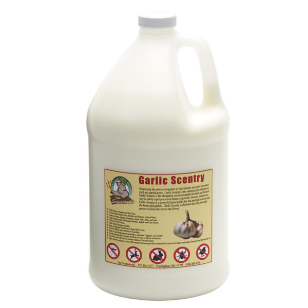 Just Scentsational Garlic Scentry - Gallon