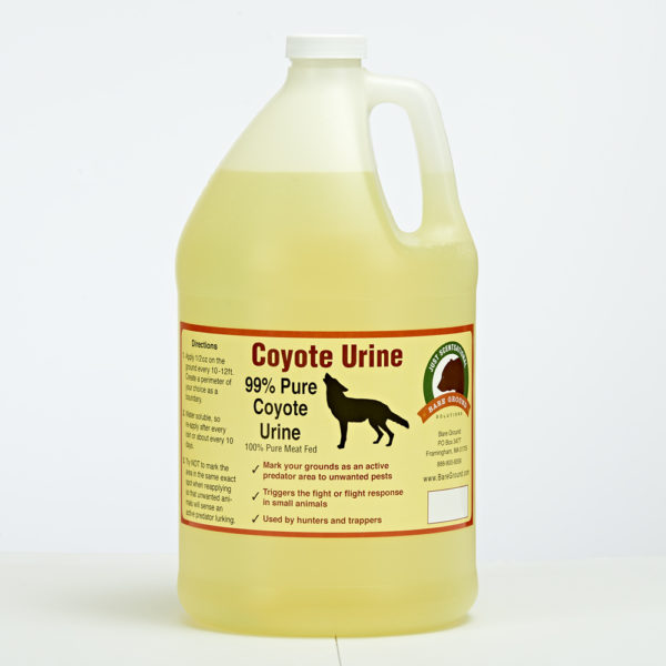 Coyote Urine Predator Scent Gallon